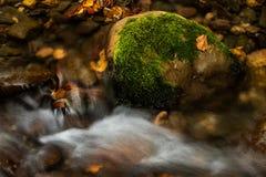 Waterfall in the mountains close up in autumn time , Romania Carpathian mountain stock photos