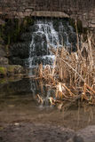 Waterfall in mountains falling in lake with reeds Stock Photography