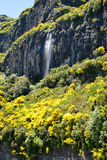 Waterfall in mountains of Madeira Stock Images