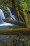 Waterfall at Murhut Creek in Olympic National Forest in Washington state. Water rushes over rocks and fallen logs at the Beautiful lower Murhut Falls in Olympic stock photo