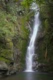 Waterfall in Native Bush royalty free stock photos