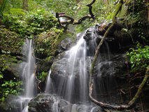 Waterfall. Of nature Royalty Free Stock Photos