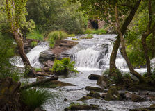 Waterfall in nature Royalty Free Stock Images