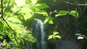 Waterfall nature tree branches. Waterfall and beautiful nature with sun light shining through tree branches stock video