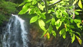 Waterfall nature tree branches. Waterfall and beautiful nature with sun light shining through tree branches stock video footage
