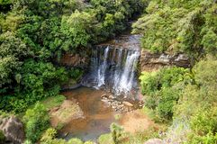Waterfall in New Zealand bush royalty free stock images