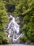 Waterfall in New Zealand Native Bush on the West Coast. royalty free stock photography