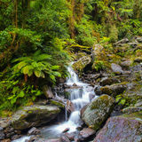 Waterfall in New zealand rain forest Royalty Free Stock Images