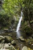 Waterfall, NZ Royalty Free Stock Photo