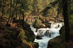 Waterfall in oregon. A mountain stream cascading down a waterfall in a forest in oregon Royalty Free Stock Photo