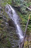 Waterfall in Oregon`s Tillamook State Forest. This is a small waterfall in Tillamook State Forest, Oregon with a fallen tree Royalty Free Stock Photography