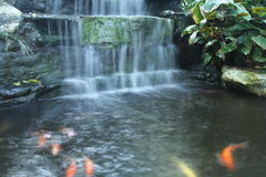 Waterfall over the Fancy carp pond Royalty Free Stock Photos