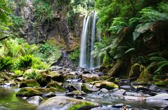 Waterfall over fern-covered rocks Stock Images