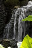 Waterfall Over Mossy Rocks With Green Leaves at Fairchild Tropical Botanic Garden in Southern Florida. Waterfall Over Mossy Rocks With Ferns and Greenery at royalty free stock images
