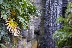 Waterfall and palms Royalty Free Stock Image