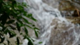 Waterfall and the plant stock video footage