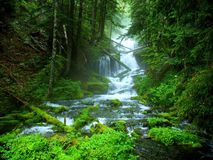 Waterfall. Pleasant scene depicting a waterfall behind mossy rocks Royalty Free Stock Photo