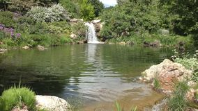 Waterfall and pond. Small waterfall going into summer pond in green foliage stock video footage