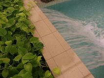 Waterfall pool with exotic ornamental plants stock video footage