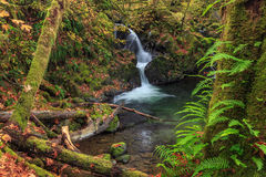 Waterfall in Quinault Park Royalty Free Stock Image