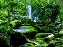 Waterfall in rain forest Stock Photos