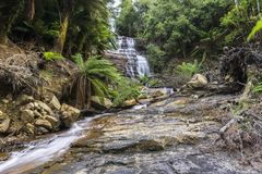 Waterfall in rain forest flowing down rock formation. With lush green vegetation in Tasmania Stock Photo