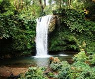 Waterfall in the rain forest stock images