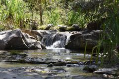 Rainforest waterfall Madagascar Stock Images