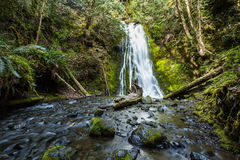 Waterfall in rain forest, Olympic national Park Royalty Free Stock Photo