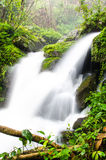 Waterfall in rain forest. Stock Image