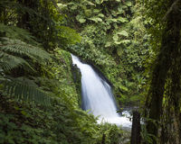 Waterfall in rain forest. On slopes of Mt Kenya Royalty Free Stock Photo