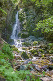 Waterfall in rain forest Stock Photography