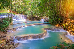 Waterfall in rain forest  Stock Image