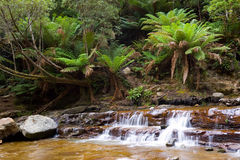 Waterfall in Rainforest Stock Photography