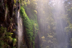 Waterfall in the Rainforest. Rainforest waterfall in Springbrook National Park, Queensland, Australia stock photography