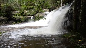 Waterfall rainforest. Beautiful Waterfall on forest natural Asia rainforest stock video