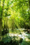 Waterfall in rainforest Stock Images