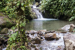 Waterfall in the rainforest of Ecuador Stock Photos