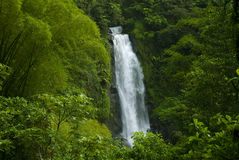 Waterfall in rainforest jungle. Beautiful waterfall in lush rainforest Stock Photography