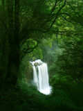 Waterfall in Rainforest, Victoria. Otway National Park stock photo