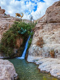 Waterfall and rapid creek Royalty Free Stock Photo