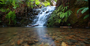 Waterfall in redwood forest Royalty Free Stock Photos
