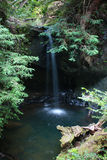 Waterfall in redwood forest Stock Images
