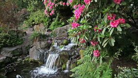 Waterfall with Rhododendron Flowers Blooming in Spring