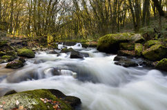 Waterfall river fowey at golitha falls   Royalty Free Stock Photo