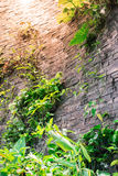 Waterfall on rock brick wall Royalty Free Stock Images