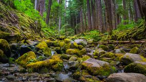 Waterfall with Rock and Moss  and tree at Sol Duc Fall. This is the picture of Sol Duc Fall Trail with rock, moss and tree at Olympic National Park Royalty Free Stock Photo