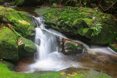 Waterfall and rocks covered with moss Stock Images