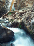 Waterfall and roots Royalty Free Stock Images