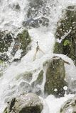 Waterfall scene in white water. Breaking on rocks Royalty Free Stock Image